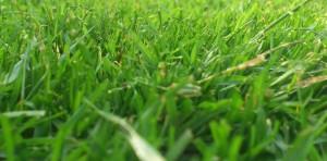 Der Albtraum vieler Gartenbesitzer, ein ungemähter Rasen